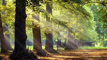 Zonnestralen in het bos van Martijn Kort
