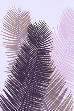 Palmenblätter mit rosa Tönung von Anouschka Hendriks