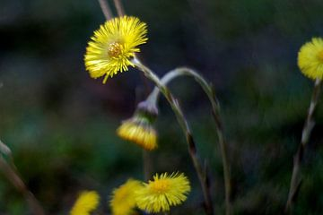 Lente bloemen von Marianna Pobedimova