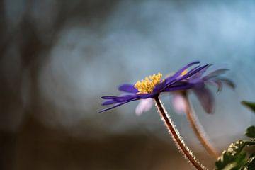 Blumen Teil 91 von Tania Perneel