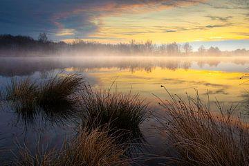 Ochtendnevel boven een meertje in het bos van Wilko Visscher