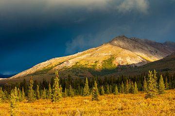 Herfst landschap in het Denali nationaal park van