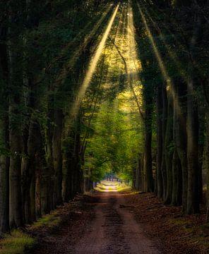Goldenes Licht von Arjen Uijttenboogaart