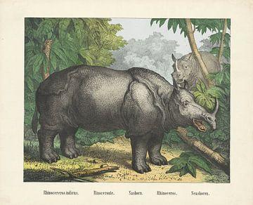 Neushoren, firma Joseph Scholz, 1829