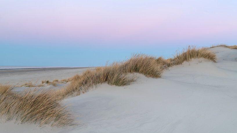 Pink Dunes 1 van Wad of Wonders