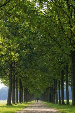 Gardens of Groeneveld von Tashina van Zwam