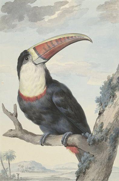 Tukan - Aert Schouman, 1748 von Diverse Meesters