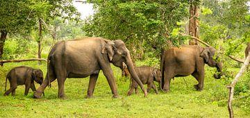 Olifanten in formatie van Nicole Nagtegaal