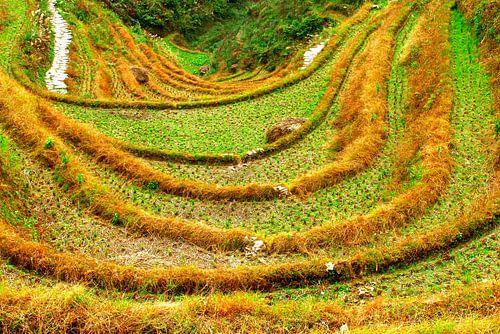 Reis-Terrassen und herbstlichen Farben, Longji (Unesco), China von Inge Hogenbijl