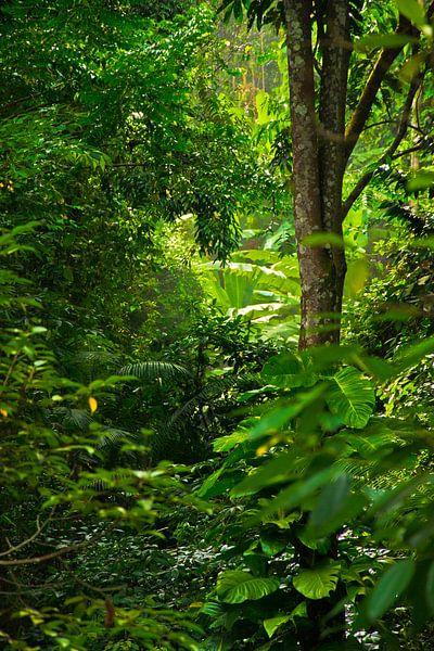 Regenwoud van Joran Quinten