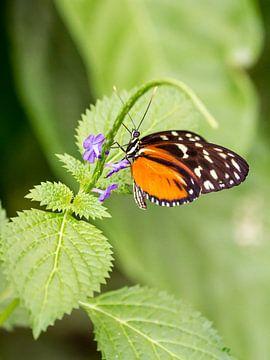 Vlinder (oranje) van Marco de Waal