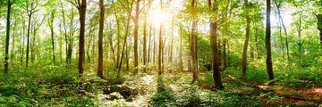 Natürlicher Wald im Frühling von Günter Albers