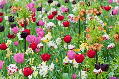 Bloemenveld in de Floriade