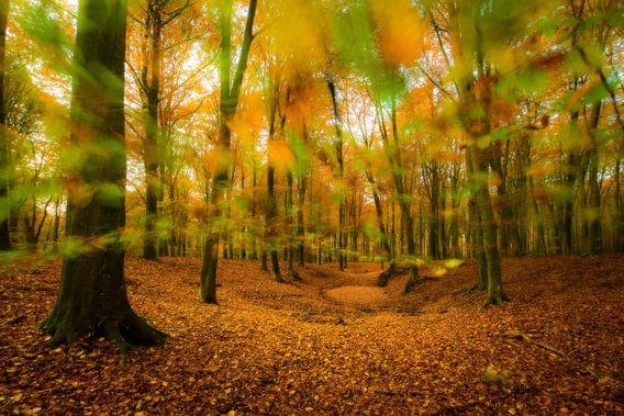 Vallende herfstbladeren van Nando Harmsen