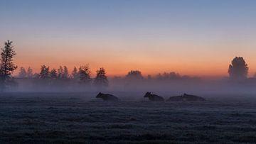 Zonsopkomst tijdens een nevelige ochtend. van Willemke de Bruin