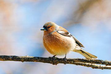 Vogel van Bojan Radisavljevic