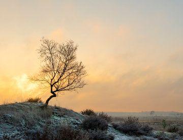 Schöner Wintermorgen mit erstaunlichem Licht. von Jos Pannekoek