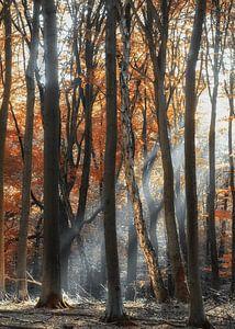 Zonnestraal door het Speuldersbos van Sabine Bartels