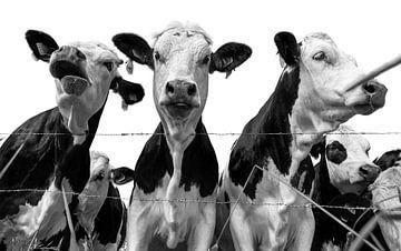 Verrückte Kühe von Ans Bastiaanssen