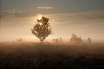 Sunrise in the mist van