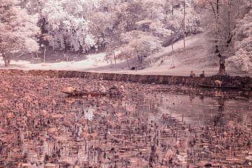 Teichpflege von Karel Wouters