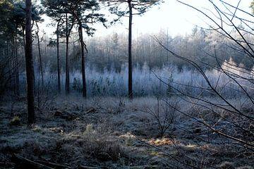 Ein kalter Wintermorgen von Photographico Magnifico