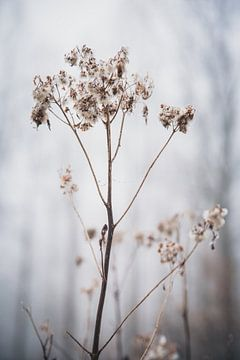 Natuur op z'n mooist van Petra Brouwer