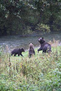 Grizzly met jonkies