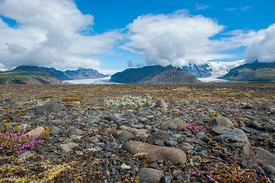 gletsjers on Island van Richard van der Hoek