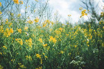 Gelbe Blumen in Grün von Niels Eric Fotografie
