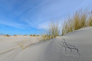Petites dunes sur la plage sur