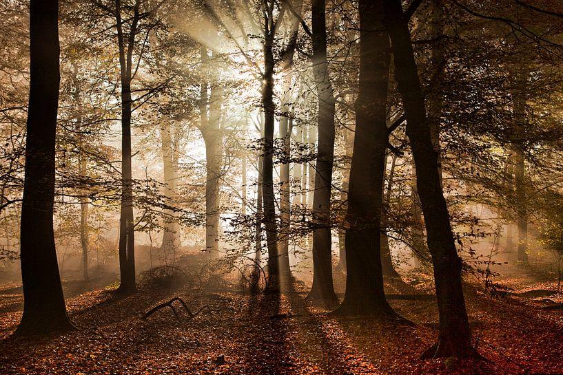 Herfst in het bos van Afke van den Hazel