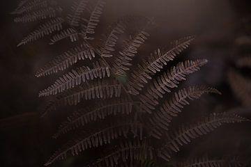 dunkler Farn von Corinna Theis