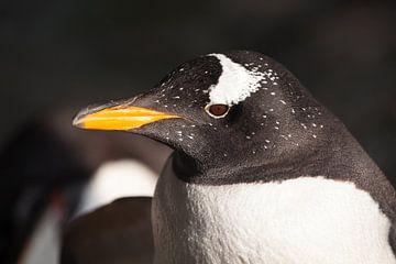 Pinguinkopf im Profil.süßer subantarktischer Pinguin, von der Sonne aus der Nähe beleuchtet, hellgel von Michael Semenov
