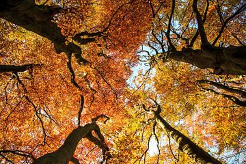 De herfst van Monica Zimmermans
