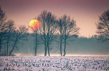 Winterzon boven besneeuwd weiland
