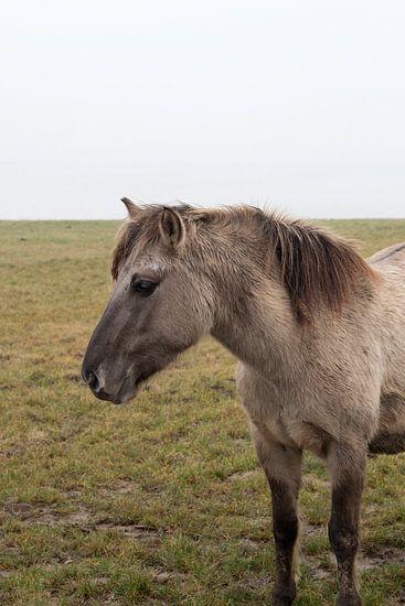 Wild paard bij slot Loevestein