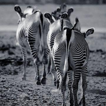 Zebra-Pfad von Fotografie Jeronimo