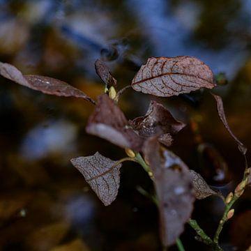 Herfstbladeren van Nanda Bussers