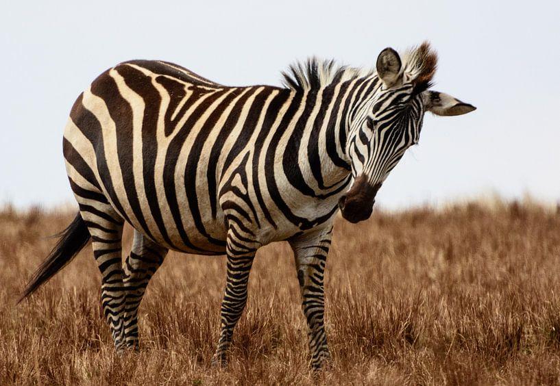 Zebra in Serengeti van Ronne Vinkx
