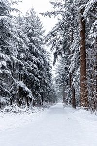Besneeuwde dennenbomen in het bos, met daartussen een pad naar iets.... van Henk Van Nunen