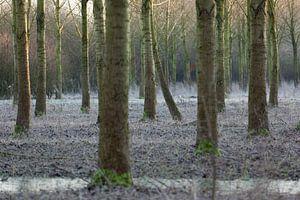 Bos Nieuw Wulven in de winter