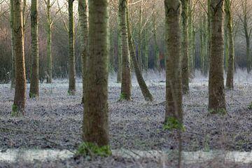 Bos Nieuw Wulven in de winter van Marijke van Eijkeren