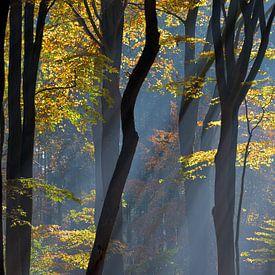 Autumn in the Dutch Woods sur Roelof Foppen