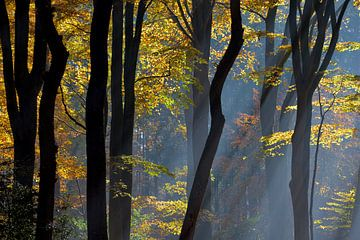 Herfst in Holland van Roelof Foppen