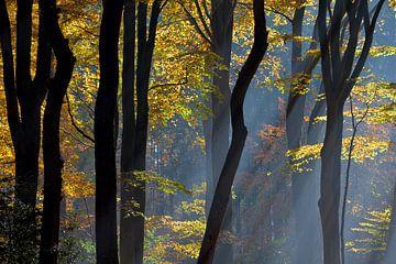 Autumn in the Dutch Woods sur