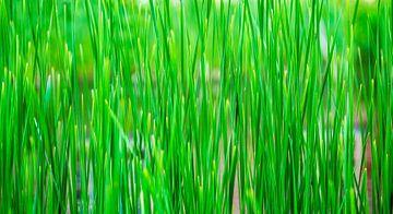 Groen als gras sur Daniël Steenbergen