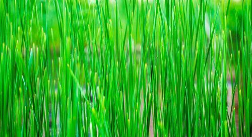 Groen als gras van