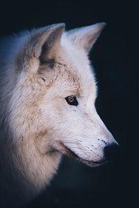 Hudson Bay wolf von Mark Zanderink