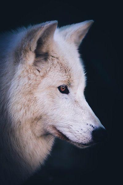 Hudson Bay wolf van Mark Zanderink